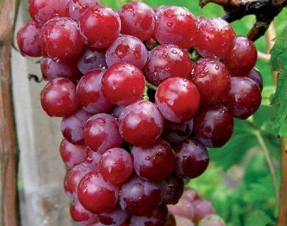 Víno vo vzťahu k človeku